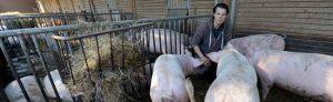 Der Schultenhof ist Teil der Eingliederungshilfe - Landwirt Johannes Jüngst kann aber die Behinderteneinrichtung nicht einfach schließen.
