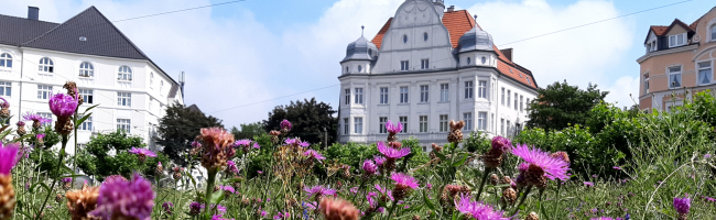 Artenvielfalt und Biodiversität: In Dortmund werden immer mehr Grünflächen zu wilden Wiesen – Schilder klären auf