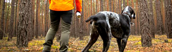 35 Millionen Kubikmeter Schadholz in Nordrhein-Westfalens Wäldern: IG Bau fordert mehr Forstpersonal in der Region
