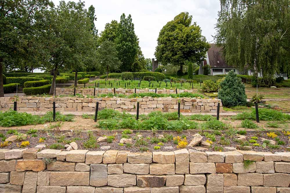 Auch so können heute Friedhöfe aussehen - Bestattung auf einem Weinberg. Fotos: Roland Gorecki