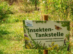 Blühwiese im NABU-Insektengarten Dortmund