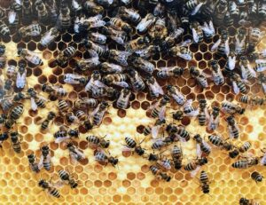 Vor der Dortmunder Hauptverwaltung von Signal Iduna sind bereits 16 Bienenvölker zu Hause.