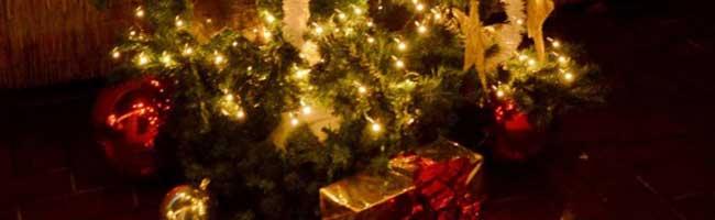 ÖkoNetzwerk Dortmund bietet auch in diesem Jahr wieder Bio-Weihnachtsbäume an – Vorbestellung notwendig
