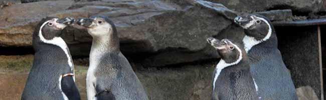 FOTOSTRECKE Im Zoo sind jetzt Besucher*innen die Exoten – Musik und Beschäftigungstherapie gegen tierische Langeweile