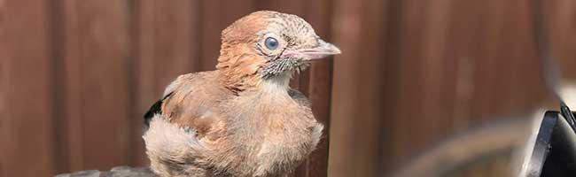 190 Vögel sterben in jeder Minute! Tierschutzpartei Dortmund schlägt Maßnahmen für städtische Gebäude vor