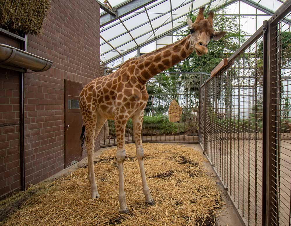 Zoo Dortmund Facebook