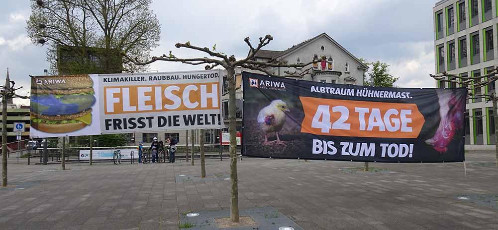 """Gegen die Bedingungen in der Hühnermast setzte die Tierrechtsorganisation""""Animal Right Watchers"""". Fotos: Marius Schwarze"""