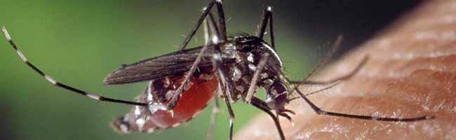 Gute Wetterbedingungen für die Plagegeister in Dortmund: Jetzt kommen die Mücken – hier gibt es Tipps zum Umgang