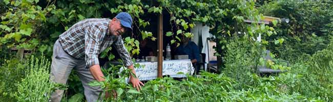 Dem ungewöhnlichsten Gartenverein Dortmunds droht das Aus – der Gemüsegarten-Verein soll Sporthallen weichen