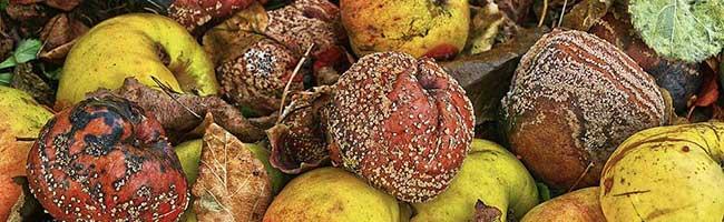 Nachhaltigkeit und Foodsharing: Tierschutzpartei Dortmund wünscht sich virtuelle gelbe Bänder für Obstbäume